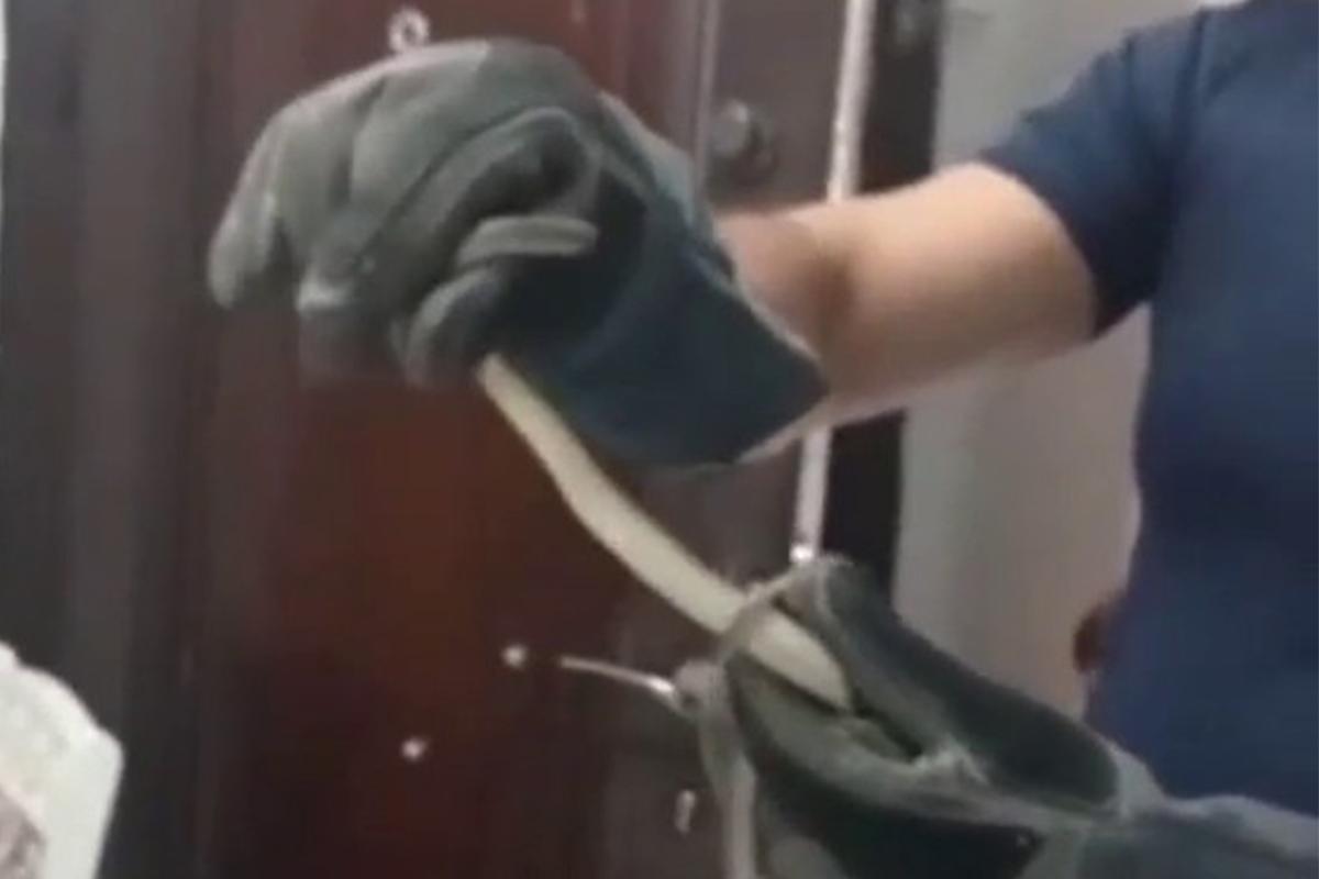 Avcılar'da evde yılan paniği